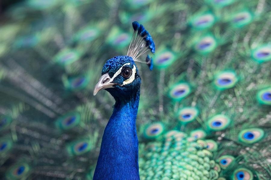 Dünyanın En İlginç 4 Kuşu