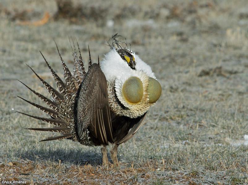 İlginç Kuş Türleri