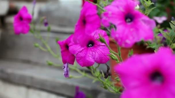 mor çiçekli bitki isimleri